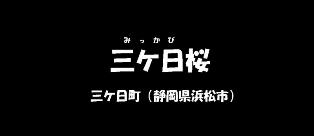 三ケ日桜 (静岡県浜松市)