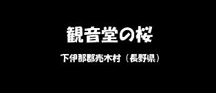 観音堂の桜 下伊那郡売木村(長野県)